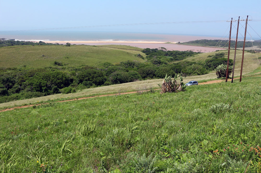 Sandy Coastal Belt (SCB) Grassland, photo by Lyle Ground